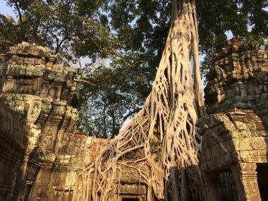 Angkor - 18