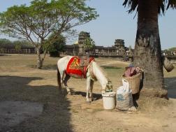 Angkor - 8