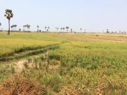 Siem Reap - 6
