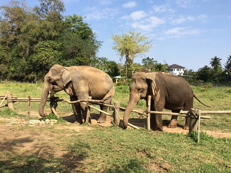 Slonie Tajlandia